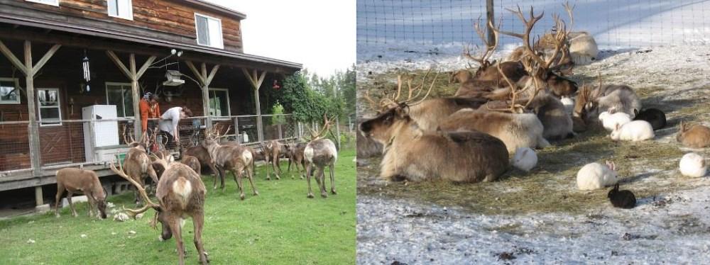 Reindeer Way Station