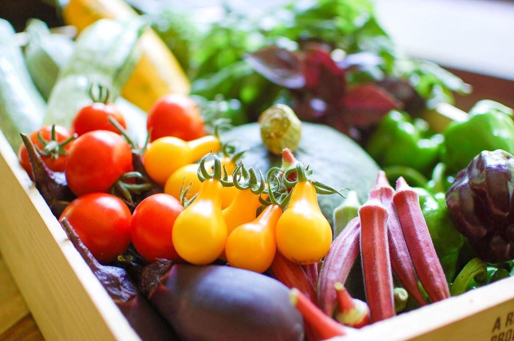 地元で採れた野菜新鮮な野菜