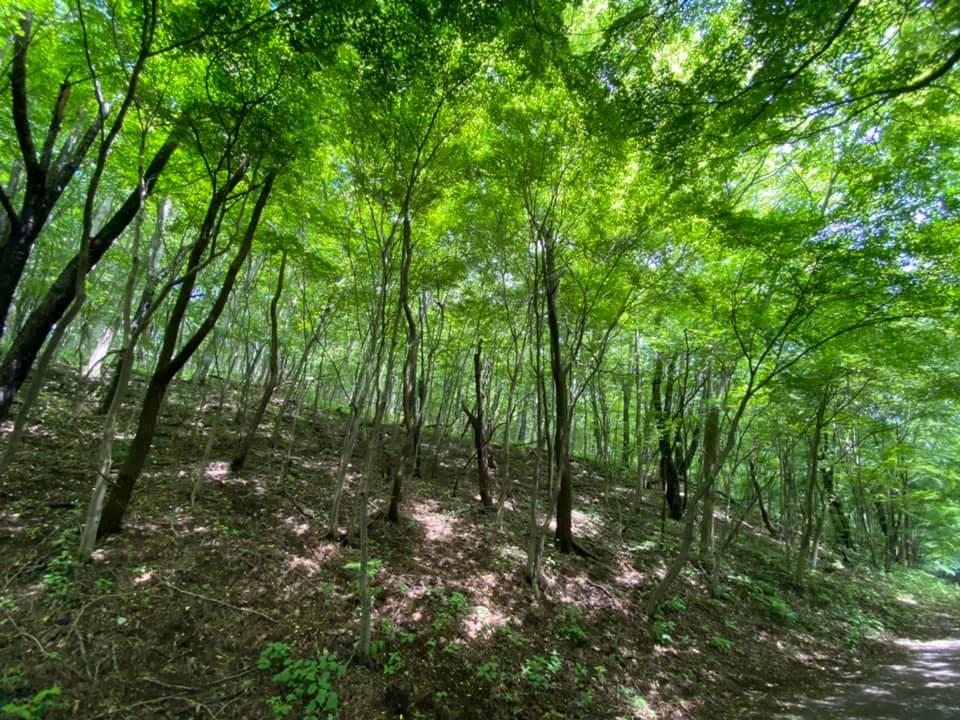 間伐ボランティア作業を通じて山を豊かな森にする「環境保全プログラム」